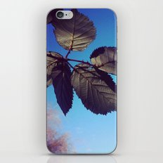 Leaves-Autumn iPhone & iPod Skin