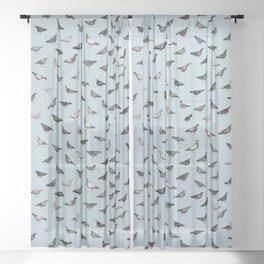 Pigeons Doing Pigeon Things Sheer Curtain