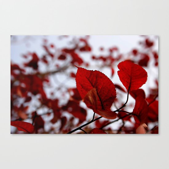 """""""Rosso le foglie"""" Canvas Print"""