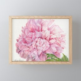 Pink Peony Floral Watercolor Detailed Botanical Garden Flower Realism Framed Mini Art Print