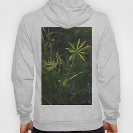Lupine flowers in lights of evening sun. Hoody