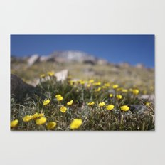 Alpine Avens Canvas Print