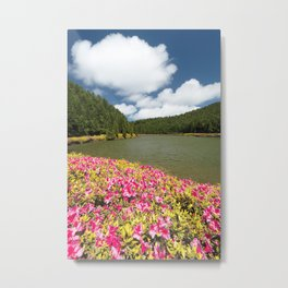 Azaleas and lake in Azores Metal Print