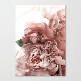 Blush Pink Floral Canvas Print