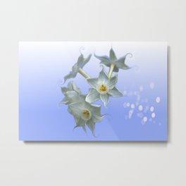 Paperwhite Daffodils  Metal Print