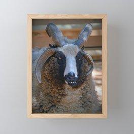 Jacob seep Framed Mini Art Print