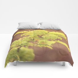 Dipped In Copper Series Comforters