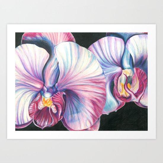 Pink Orchid Study Art Print