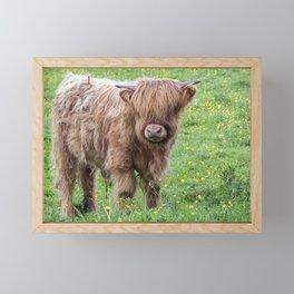Baby highland cow Framed Mini Art Print