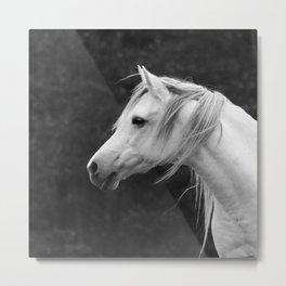 Arabian horse in black and white Metal Print