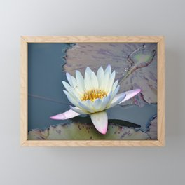 Water Lily in Pond Framed Mini Art Print