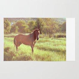(w)horse Rug