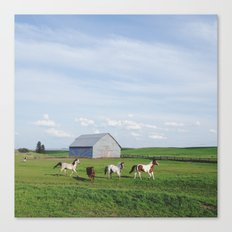 Farm Horses Canvas Print