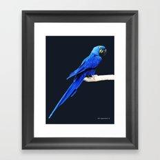 Hyacinth Macaw parrot Framed Art Print