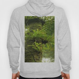 Bromeliads up a Sierra Palm in El Yunque rainforest PR Hoody