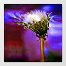 Only a dandelion  Canvas Print