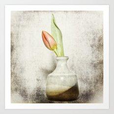 Single Tulip Still Life Art Print