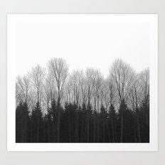 Trees in rows Art Print