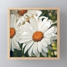 Summer Daisy in the sun Framed Mini Art Print