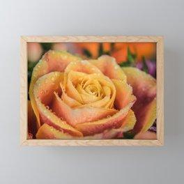 Dew Laden Rose Framed Mini Art Print