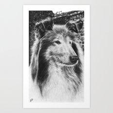 Rough Collie Dog Art Print