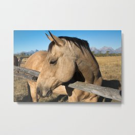 Shy - Horse Plays Coy in Western Wyoming Metal Print