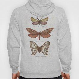 Forester Moth, Venus Moth & Spanish Moon Moth Hoody