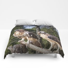 Pair of Red-tail Hawks Comforters