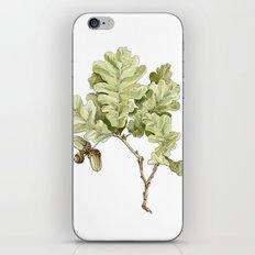 English Oak iPhone & iPod Skin