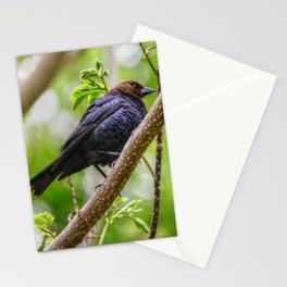 Brown Headed Cowbird Stationery Cards