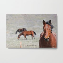 Extremely Photogenic Horse Metal Print