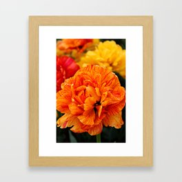 Open Tulip Framed Art Print