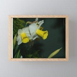 Yellow Trumpet Daffodils Framed Mini Art Print