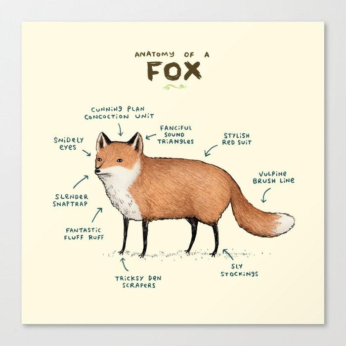 Anatomy of a Fox Leinwanddruck