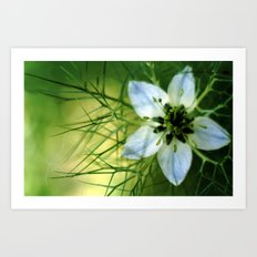 Love In A Mist Art Print
