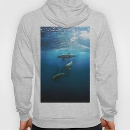 Swimming with Dolphins Hoody