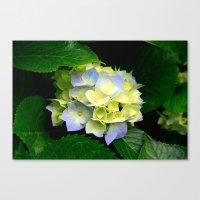 hydrangea Canvas Prints featuring Hydrangea  by Chris' Landscape Images & Designs