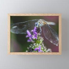 Blue eyed Dragonfly Framed Mini Art Print