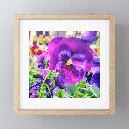 Pansy Strong Framed Mini Art Print