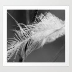 Lost Feather (Monochrome) Art Print