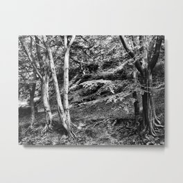 ancient forest trees Metal Print