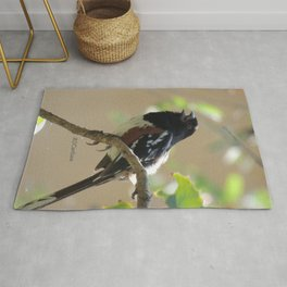 Spotted Towhee Scopes the Oak Grove Rug