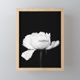 White Peony Black Background Framed Mini Art Print