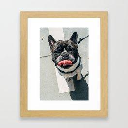 Dawg Framed Art Print