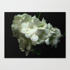 Bloomin' Onion Canvas Print
