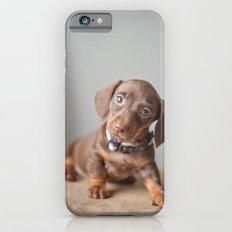 Dachshund Puppy iPhone 6s Slim Case