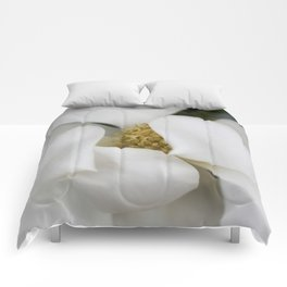 White Magnolia, Magnolia Photograph, Flower Photograph, Nature Photography,  Comforters