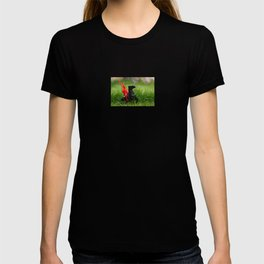 Red Indian on a Black Horse in the Green Grass T-shirt