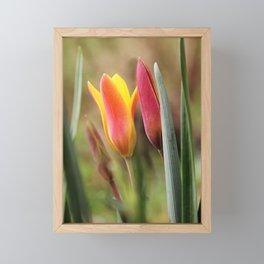 Tender slender surprise Framed Mini Art Print