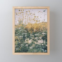 Cypriot Sunset with Queen Annes Lace Flowers Framed Mini Art Print